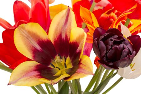 tulips isolated on white background: Bouquet of different tulips in a glass jar isolated on white background Stock Photo