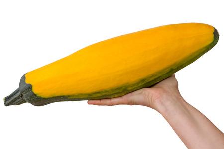 Yellow squash in the palm of the hand isolated on a white background