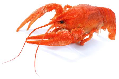 Rode gekookte rivierkreeften op witte achtergrond Stockfoto