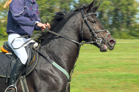 A rider on a beautiful black horse jumps on a green meadow 版權商用圖片