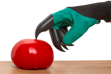 Hand in glove with plastic claws and tomato isolated on a white background