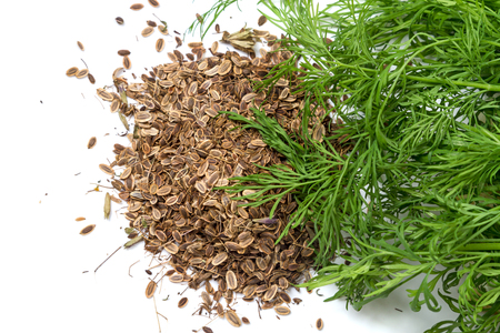 Dry seeds and fresh green dill isolated on white background Stock Photo