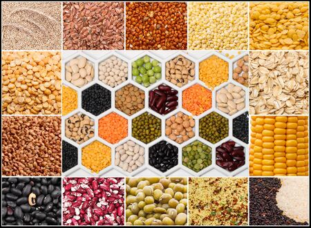 Collage of various seeds of a plant of cereals and grains