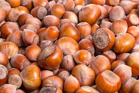 Heap of ripe forest nuts hazelnuts, Natural background
