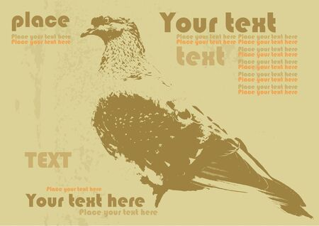 vector bird pigeon on old paper, grunge background for text Vector