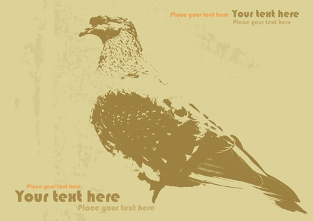 bird pigeon on old paper, grunge background for text Vector