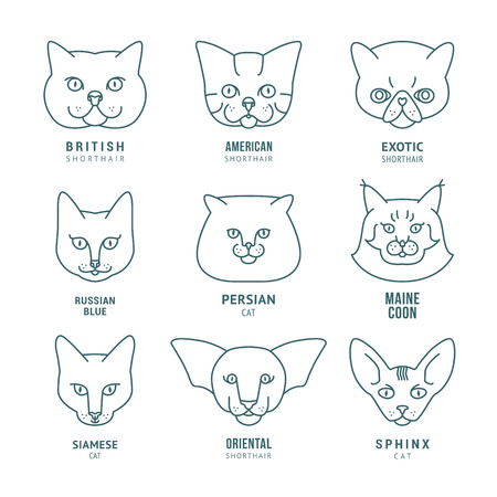 pet cat: vector set with different cat breeds, icons for veterinarian clinic or pet shop