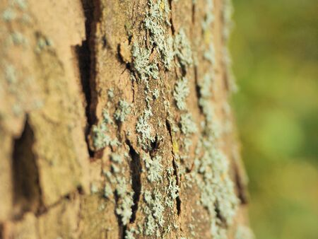 Close-up of the bark of a tree in the nature in autumn with a green blurry background