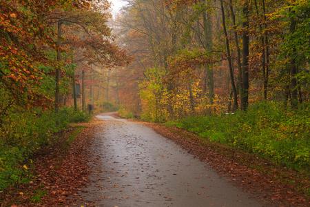 Narrow street on a rainy autumn day in the Tricity Landscape Park, Gdansk, Poland Stok Fotoğraf