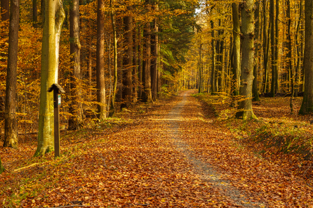 Forest path in autumn colors in the Tricity Landscape Park, Gdansk, Poland Stock Photo