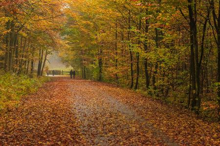 Caminando en un lluvioso día de otoño en el Tricity Landscape Park, Gdansk, Polonia Foto de archivo - 90275610