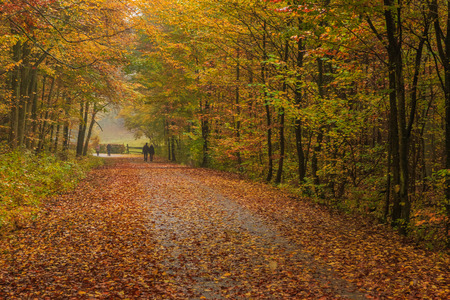 Walking in a rainy autumn day in the Tricity Landscape Park, Gdansk, Poland
