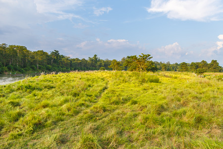 Beautiful view inside of the forest in the Royal Chitwan National Park, Nepal. The park is 932 sq. km, is mainly covered by jungle. 스톡 콘텐츠 - 91742559