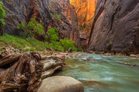 Virgin River Narrows in Zion National Park. The most popular and scenery trail in Zion. Utah, USA