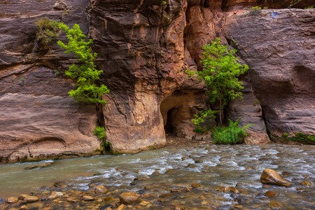 Trees in the Virgin Narrows River in Zion National Park. The most popular and scenery trail in Zion. Utah, USA Stock Photo