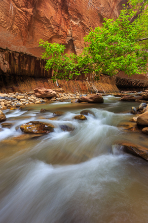 Trees in the Virgin Narrows River in Zion National Park. The most popular and scenery trail in Zion. Utah, USA Imagens