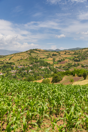 Field of corn in the Albanian mountains. Hills in the background. Stock Photo