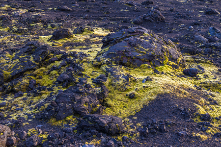 Green moss on black volcanic rock on the Kamchatka Peninsula in the far east of Russia.