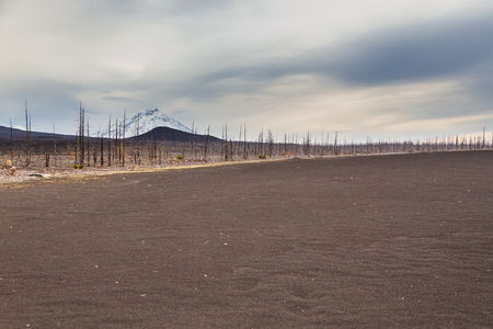 Dead forest in the center Kamchatka Peninsula, around the withered trees. Russia. 免版税图像