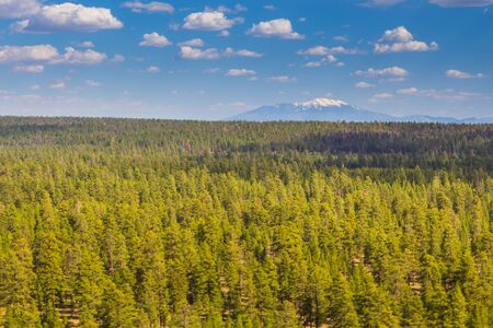 View of the Colorado Plateau in Arizona. Vast forest areas, mountains in the background. USA. 版權商用圖片