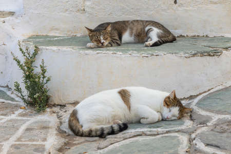 Wild white-brown Cats lying on a sidewalk steps. Chora town street on the island Folegandros. Cyclades, Greece.