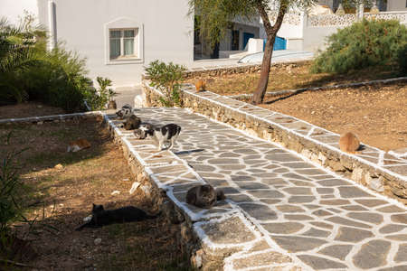 Wild white-brown Cats lying on a sidewalk steps. Piso Livadi town street on the island Paros. Cyclades, Greece.