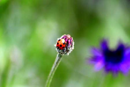 sumptuous: Ladybird Stock Photo