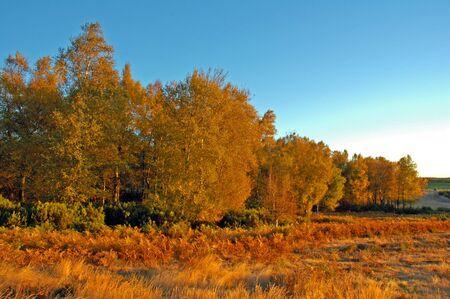 Big oak trees in a beautiful misty autumn park
