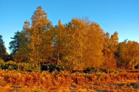 Fila di alberi allineati lungo la strada nella Napa Valley in autunno