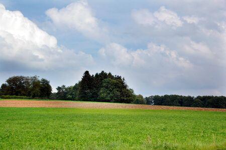 Il campo e il cielo blu.
