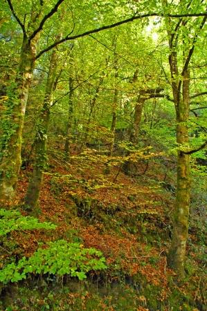 foglie di autunno Archivio Fotografico