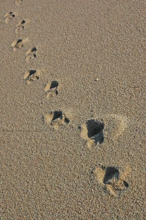 Footprints going over a sand dune Stock Photo - 17075107