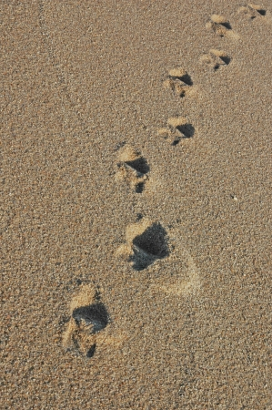 Footprints going over a sand dune Stock Photo - 17075094
