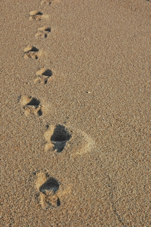 Footprints going over a sand dune photo