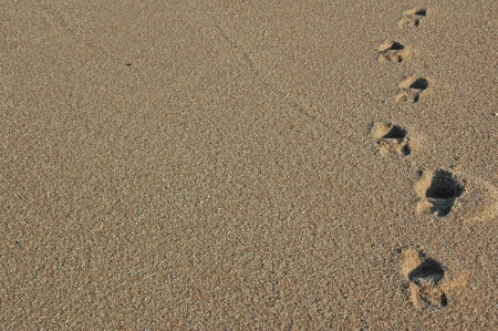 Footprints going over a sand dune Stock Photo - 17075098