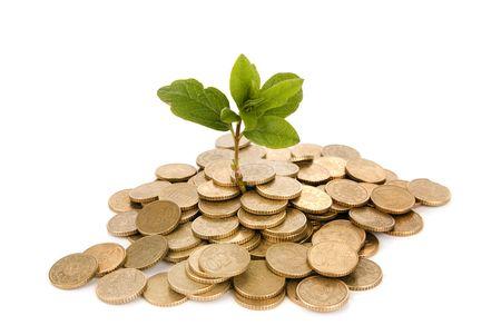 Concetto di una pianta e un sacco di monete d'oro isolato su sfondo bianco