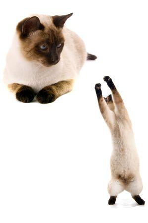 young amazing cat isolated on white background Stock Photo - 17075732