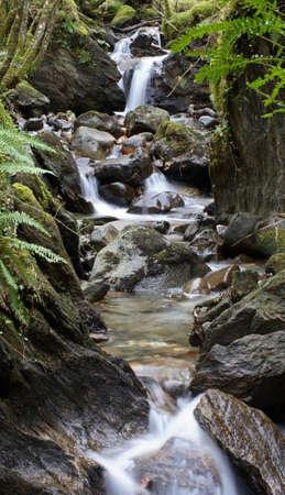 gully: Fern gully waterfall