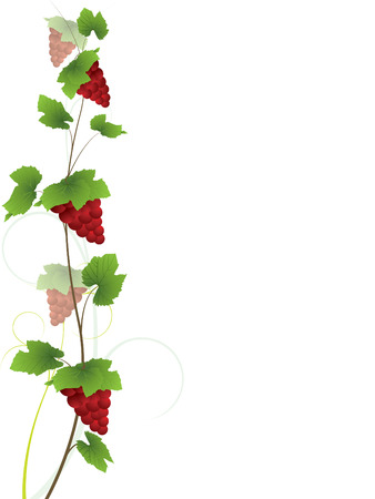 Vine with red grape bunches Illustration