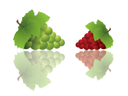 Bunches of grapes with reflections Vector