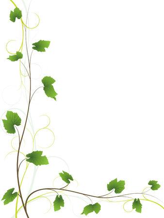 boarder: Vine background Illustration
