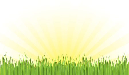 Spring seamless grass with sunrays background Stock Vector - 4076480