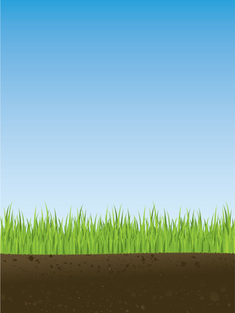 Cross section of spring grass Vector