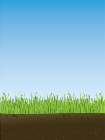 soils: Sezione trasversale di primavera in erba