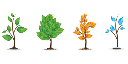 winter garden: The four seasons Illustration