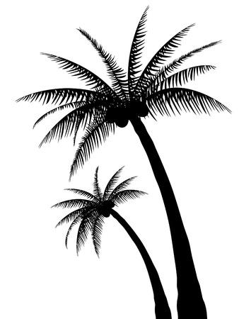 palmtrees: Palm tree silhouette Illustration