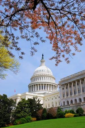 미국 국회 의사당 힐 건물 나무, 잔디 및 파란 하늘, 워싱턴 DC, 미국