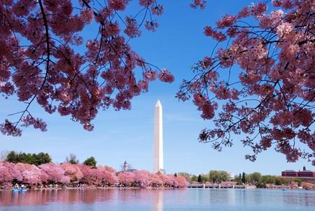 george washington: Cherry blossom and Washington monument over lake, Washington DC. Stock Photo
