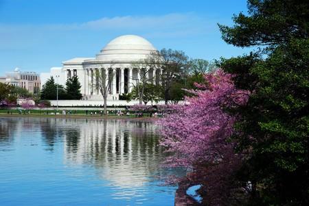 jefferson: Jefferson national memorial with cherry blossom in Washington DC.