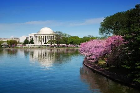 cereza: Jefferson memorial nacional con flor de cerezo en Washington DC.